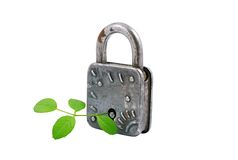 Vintage padlock and green plant, Royalty Free Stock Photography