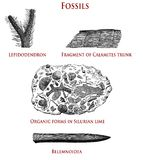 Vintage paleontology illustration of fossilized plants and wildlife. Vintage illustration of fossils:  lepidodendron, calamites, organic forms in Silurian lime Royalty Free Stock Photo