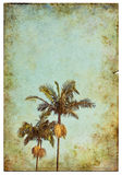 Vintage Palm Postcard Stock Photos