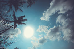 Vintage palm on sky background with clouds. Stock Image