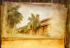 Vintage palm tree Stock Images