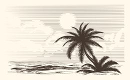 Vintage palm tree sketch Stock Image