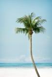Vintage palm tree on the tropical beach. Seaside - summer season Stock Image