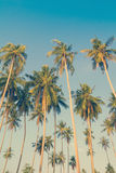 Vintage palm trees Stock Photo