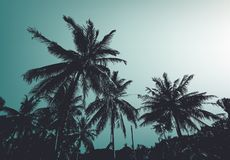 Vintage palm trees. Vector background Stock Photo