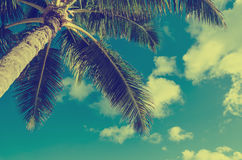 Vintage Palms tree background Royalty Free Stock Images