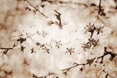Vintage paper background with blooming branch Stock Photos