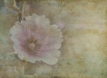 Vintage paper of beautiful pink wild flower Royalty Free Stock Photo