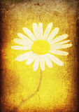Vintage paper with camomile image. Royalty Free Stock Photos
