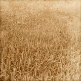 Vintage paper. Field of wheat. Vintage paper textures. Field of wheat Stock Image