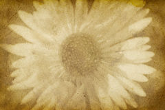 Vintage Paper with Flower Imprint Royalty Free Stock Photo