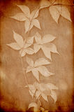 Vintage paper with grape leaves Stock Photography