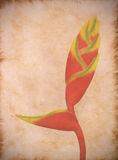 Vintage paper with a heliconia Stock Images