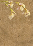Vintage paper with irises Royalty Free Stock Photo