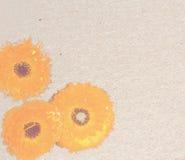 Vintage paper with orange chrysanthemums Royalty Free Stock Photo