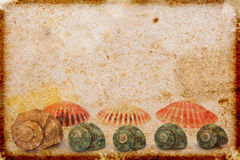 Vintage  paper with sea shells Royalty Free Stock Photos