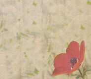 Vintage paper texture with anemone Royalty Free Stock Images