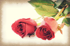 Vintage paper texture, Two red roses Royalty Free Stock Images