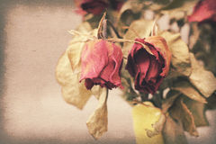 Vintage paper texture, withered or died rose Royalty Free Stock Photo
