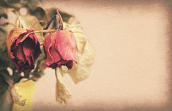 Vintage paper texture, withered or died rose with copy space on Royalty Free Stock Photos