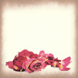 Vintage paper texture, Withered roses and petals Royalty Free Stock Images