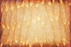 Vintage paper textures with dried corns hanging in rows image. Stock Photos