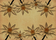 Vintage paper textures with Lotus Flowers Royalty Free Stock Photos