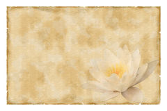 Vintage paper with waterlily Royalty Free Stock Images