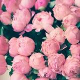 Vintage Paris roses Royalty Free Stock Image