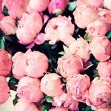 Vintage Paris roses Royalty Free Stock Images