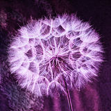 Vintage Pastel Background - vivid abstract dandelion flower. Vintage background - Vivid color abstract dandelion flower - extreme closeup with soft focus Stock Photo