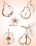 Vintage pears Stock Photos