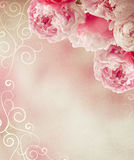Vintage peonies frame Stock Photo