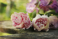Vintage peonies on wooden plank Royalty Free Stock Image