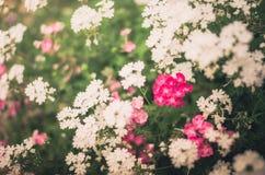 Vintage pequeno selvagem das flores Imagens de Stock