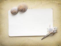 Vintage photo album. Album with seashells Stock Photography