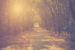 Vintage photo of autumn forest Stock Photos
