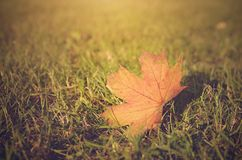 Vintage photo of autumn leaf on field at sunset Royalty Free Stock Photos