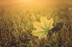 Vintage photo of autumn leaf on field at sunset Stock Photo