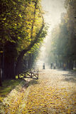 Vintage photo of an autumn park Royalty Free Stock Images