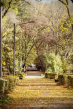 Vintage photo of autumn park Royalty Free Stock Photos