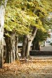 Vintage photo of autumn park Stock Photography