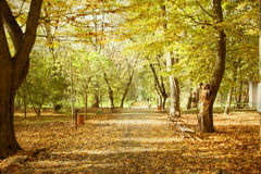 Vintage photo of autumn park Royalty Free Stock Images