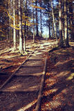 Vintage photo of autumn path in forest Stock Photo