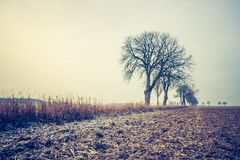 Vintage photo of autumn trees on field. Royalty Free Stock Photo