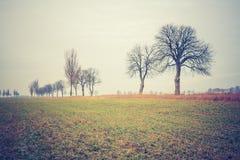 Vintage photo of autumn trees on field. Stock Photography