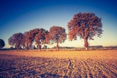 Vintage photo of autumn trees on field. Stock Photos