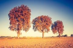 Vintage photo of autumn trees on field. Royalty Free Stock Photos