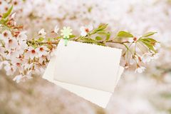 Vintage photo back side with blossom cherry flower sakura. In spring time Stock Image