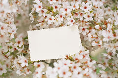 Vintage photo back side with blossom cherry flower sakura. In spring time Royalty Free Stock Photo